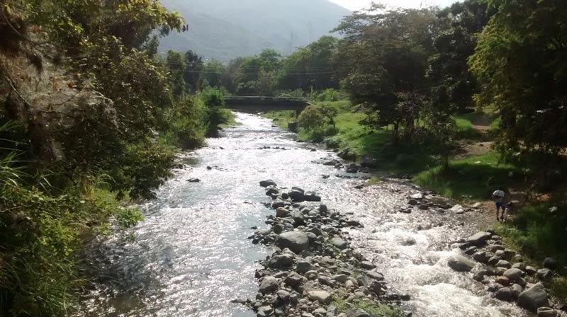 Cuencas del Valle serán reforestadas con un capital de 3.300 millones de pesos