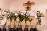 22.500 palmas vivas entregará la CVC a feligreses católicos para Semana Santa
