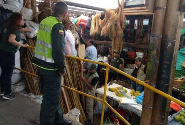 En Semana Santa harán operativos de control contra el tráfico ilegal de palma de cera