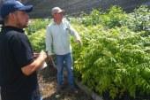 Vivero Municipal: máximo proveedor de zonas verdes en Cali