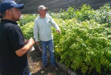Vivero Guacas de CVC donará 7.000 plántulas para siembra y mantenimiento en el Valle