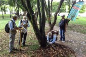 Árboles encadenados con llantas y cemento son liberados por Dagma en Cali