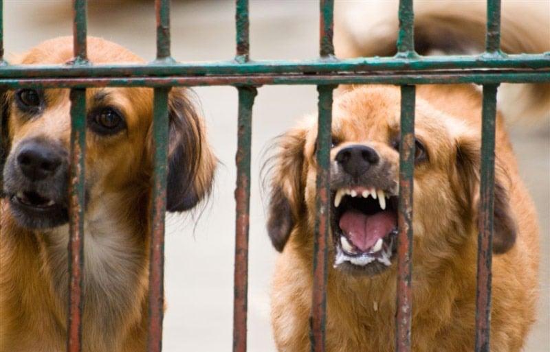 Alcaldía de Cali da recomendaciones en caso de sospecha de estar contagio de rabia animal
