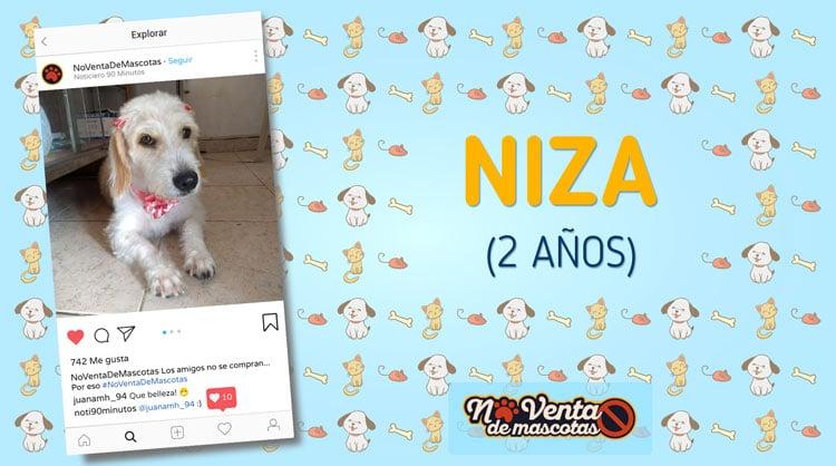 ¡Hola, soy Niza! Y mis crespos te enamorarán