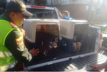 Autoridades rescatan a cinco cachorros enfermos de una venta ilegal en Cali
