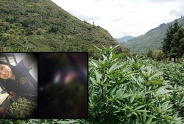 Colombo-argentina fue asesinada en Corinto, Cauca, lideraba el 'Cannabis Tour'