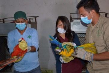 CVC liberó 15 aves de cuatro especies en la Reserva Natural Nirvana