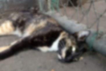 Denuncian envenenamiento de animales en la galería de Siloé, oeste de Cali