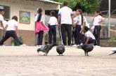 Por invasión de palomas, salud de estudiantes de colegio en Cali está en riesgo