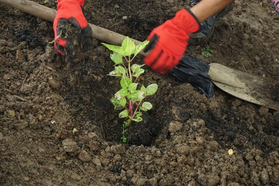 CVC invita a la comunidad a participar en jornada de siembra en el cerro de La Bandera