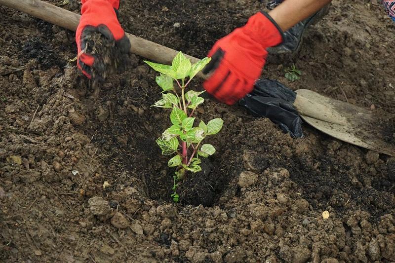 Con el Pacto 'Unidos por el río Meléndez' se sembrarán 20.000 árboles en Villacarmelo