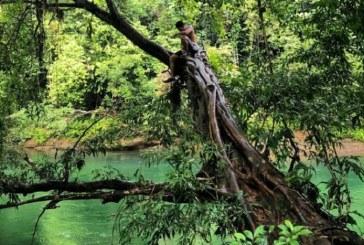 San Cipriano se prepara para reabrir su reserva natural