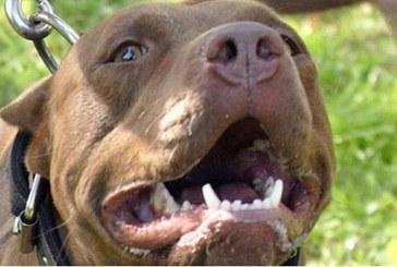 Perro de raza potencialmente peligrosa atacó a mujer de 75 años en vivienda de Cali