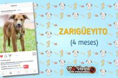Hola, soy Zarigüeyito y quiero ser tu nuevo amigo