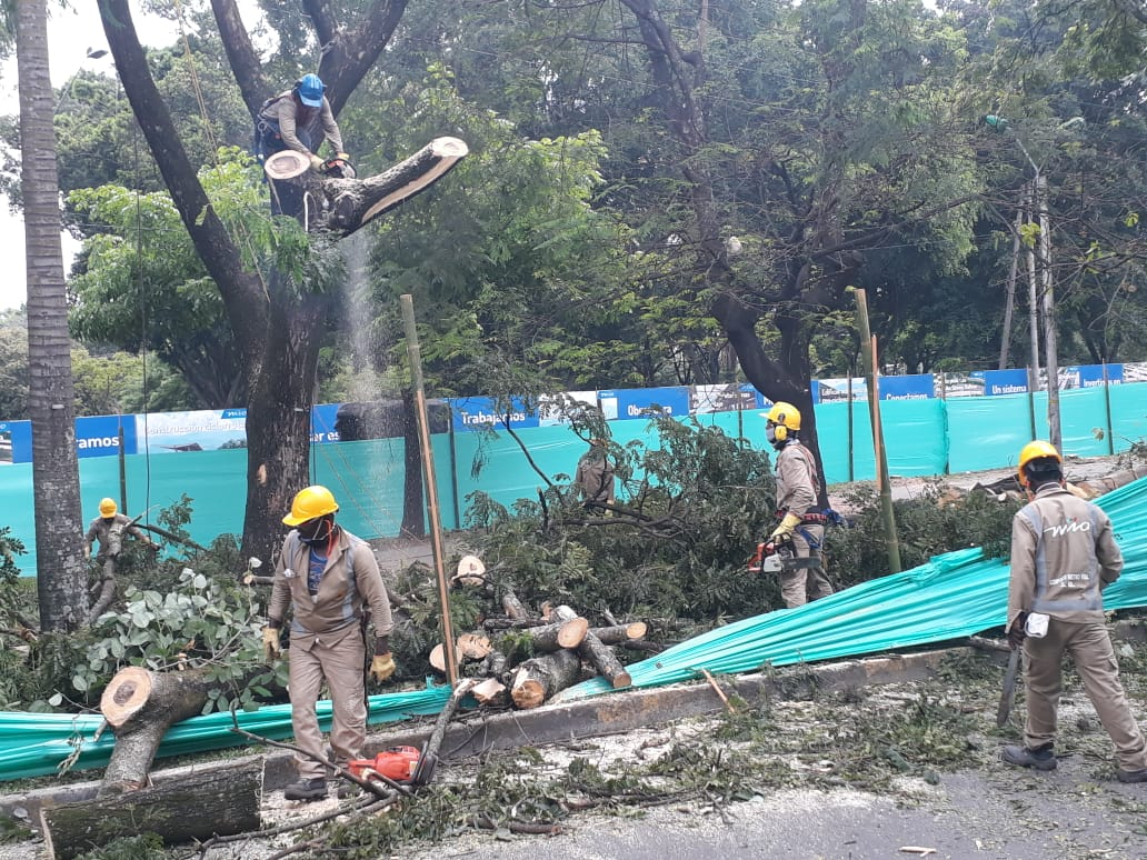 Según Metrocali, conservarán el 69% de árboles en terminal Simón Bolívar del Mío