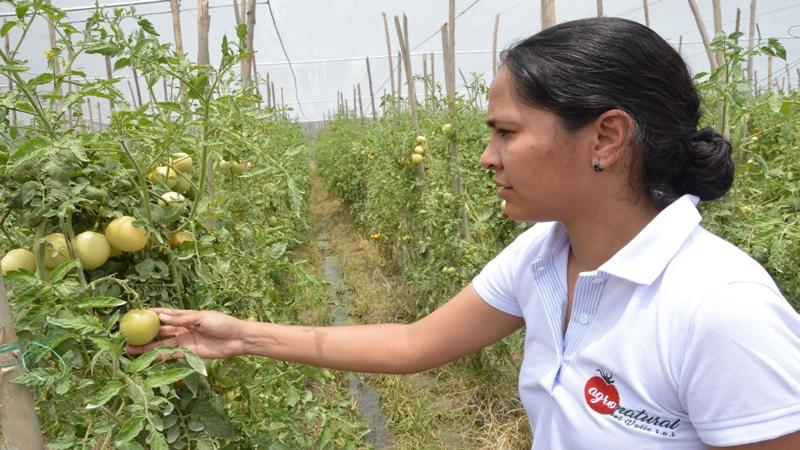 Autoridades del Valle iniciaron evaluación agropecuaria a cultivos del departamento