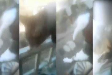 Indignación en Cali: joven lanzó un gato desde cuarto piso y grabó el violento hecho