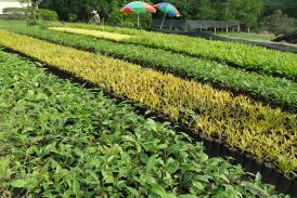 Programa Reverdec sembró dos millones de árboles en 30 municipios del Valle