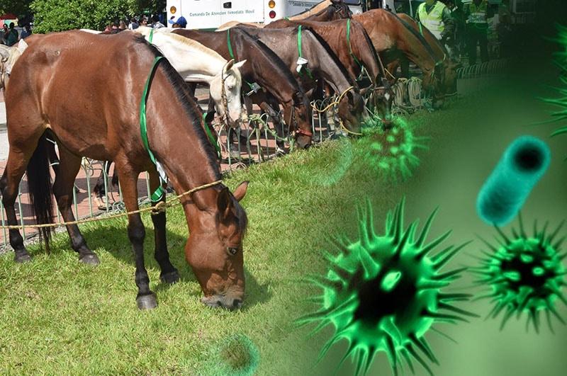 Asciende la cifra de municipios con presencia de influenza equina en el Valle de Cauca