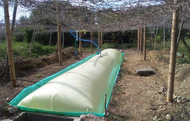 Autoridades implementarán estrategia de producción más limpia de porcinos en Palmira