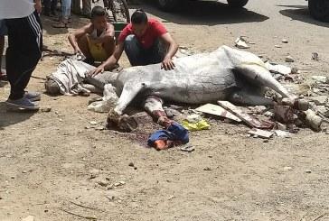 Aplican eutanasia a caballo carretillero en Cali tras ser atropellado por carro de basuras