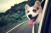 Nos los dejes en casa, sigue estos cinco consejos para viajar con tu mascota