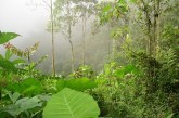 CVC busca la preservación ambiental mediante la participación comunitaria