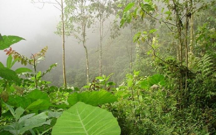CVC: delimitan 4.500 hectáreas del páramo El Duende situado en Valle y Chocó