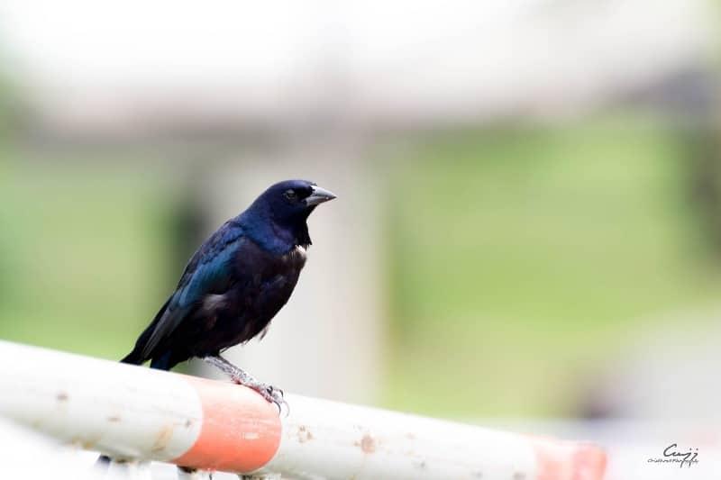 Colombia, campeón mundial de avistamiento de aves por tercera vez en el 'Global Big Day'