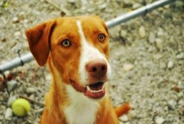 Vecinos del oeste de Cali se oponen a construcción de 'hogar de paso' para animales