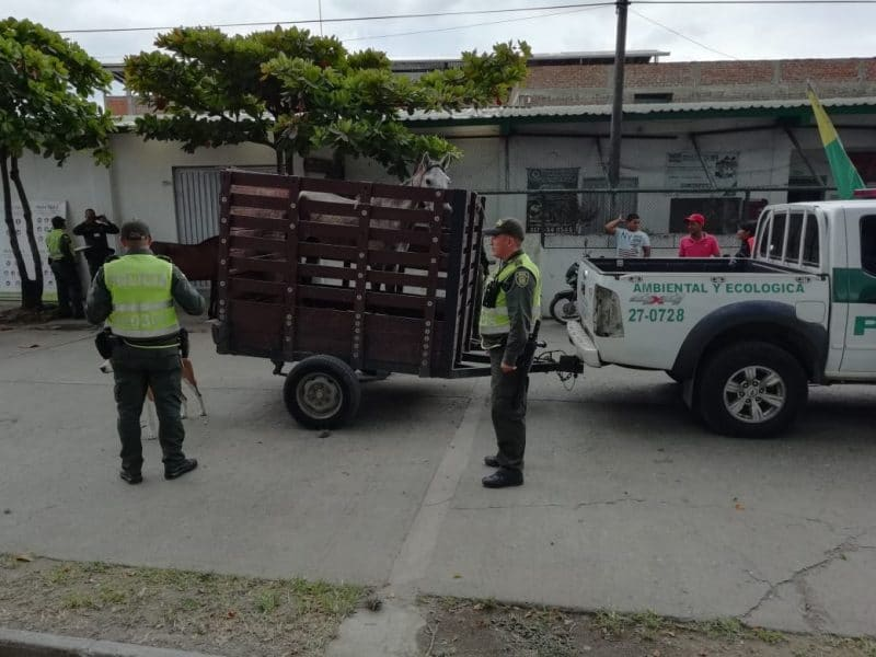 Autoridades de Candelaria ubican y multan a dueño de caballo que fue maltratado