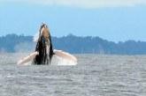 Así se prepara Buenaventura para la temporada de ballenas durante la pandemia