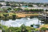 Siembra de peces Guppy mitigará aumento de zancudos por agua estancada en obra