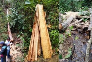 Con medida preventiva, CVC detuvo tala ilegal de madera en Palmira