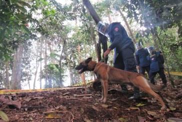 Ejército Nacional inició por primera vez técnicas de desminado canino en Valle
