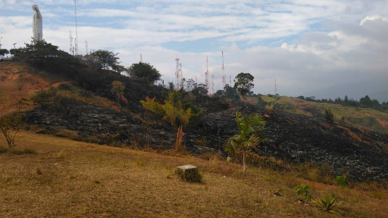 A pasos agigantados avanza el proyecto de reforestación de los cerros Cristo Rey y Los Cristales