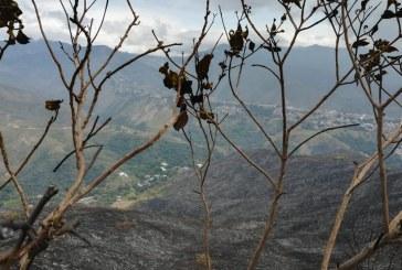Lanzan Plan 'Ave Fénix', con el que buscan recuperar cerro de Cristo Rey tras incendio