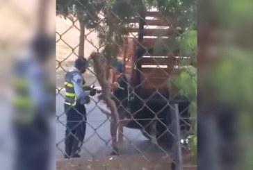 En video quedó grabado el soborno de un ciudadano a un agente de Tránsito en Cali