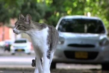 Habitantes del barrio Vipasa de Cali denuncian envenenamiento masivo de gatos