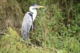 Día mundial de aves se celebró en centro educativo Laguna de Sonso de la CVC