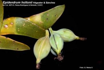 Científicos de Univalle y CVC descubrieron nuevas especies de orquídeas en el Valle