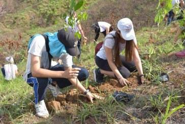 Nueva jornada para que los caleños siembren árboles en los cerros tutelares