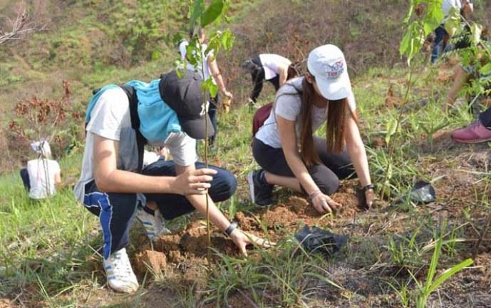 Tras incendio forestal de agosto, siembran 200 arbustos en cerro de Cristo Rey