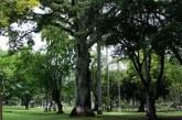 Inició nuevo censo arbóreo en Cali, a la fecha han identificado 27.000 individuos