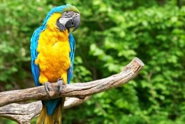 CVC lideró operación que llevó a la libertad a 159 animales de varias especies