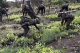 Programa 'Hecho a la medida' intervendrá cultivos ilícitos en Jamundí