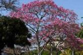 Cali ya hace parte de la Red Mundial de Bosques Urbanos Cities4Forest