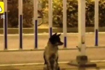 Un perro lleva tres meses esperando en una calle a su dueña fallecida en China