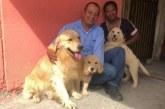Expositor canino recupera tres de los cuatro Golden Retriever robados en Cali