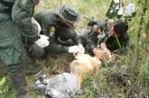 'Nala', la canina que murió por salvar a su guía de las minas en Tumaco